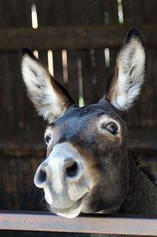 donkey-3636234__340